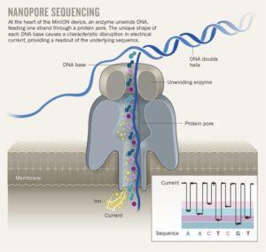 Nanopore sequencing principle