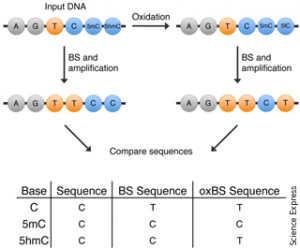 (Oxidative) Bisulfite Sequencing